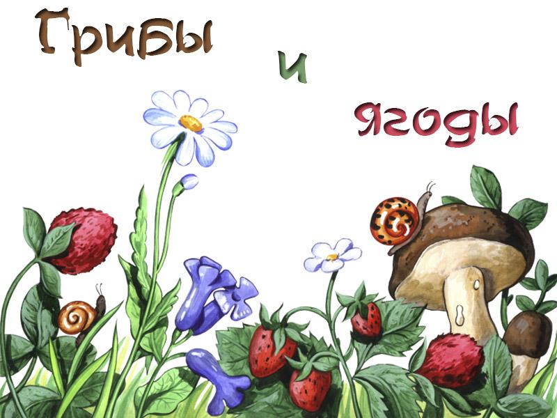 Картинка леса с грибами и ягодами для детей