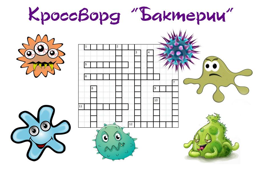 Бактерии их разнообразие Строение Жизнедеятельность Типы бактерий