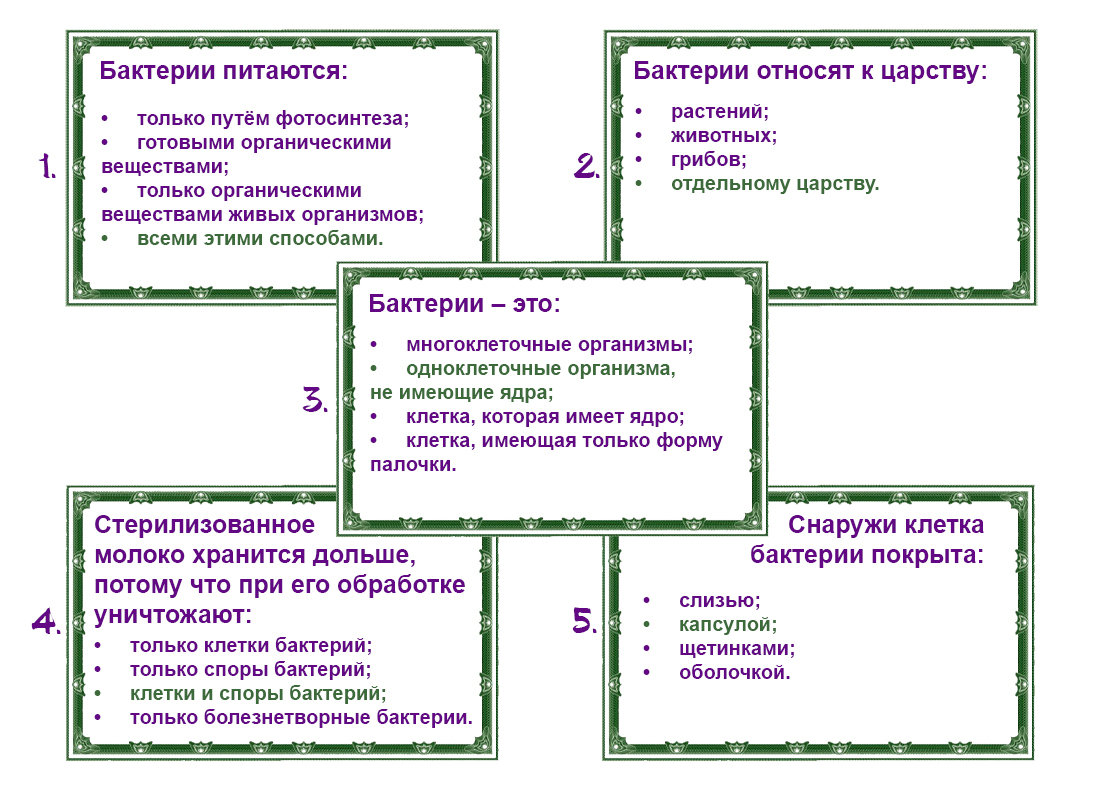 Разновидности бактерии фото