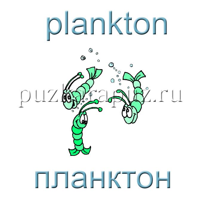 состав зоопланктона для ловли толстолобика