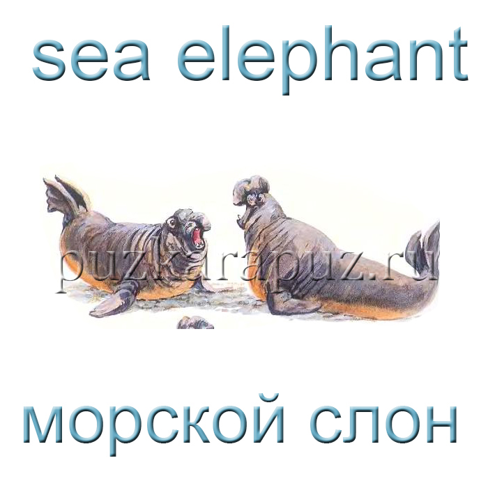 морских животных с названиями